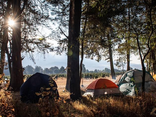 Tiendas de acampar debajo de los árboles en un bosque