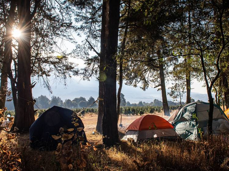 Camping en el Bosque de los Árboles de Navidad