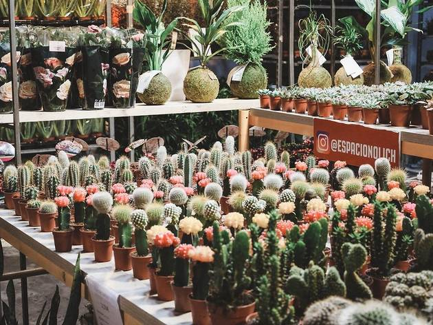 Maison Bouture. Tienda pop up de plantas