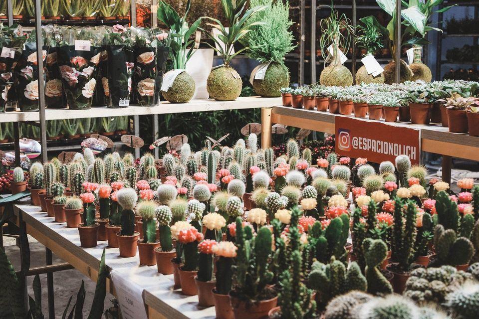 Vuelve el mercado de plantas efímero de La Latina