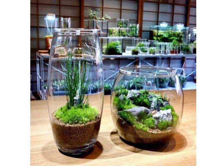 鎌倉の古民家で苔と過ごす。