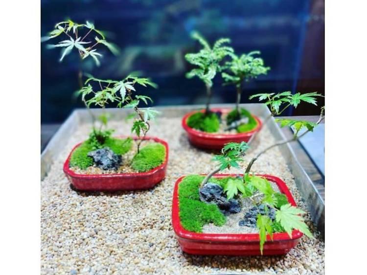 盆栽から学ぶ。