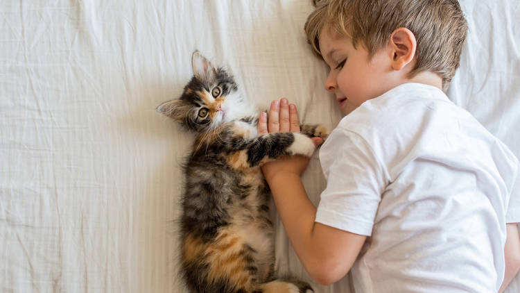 Consejos de convivencia para entre niños y gatos