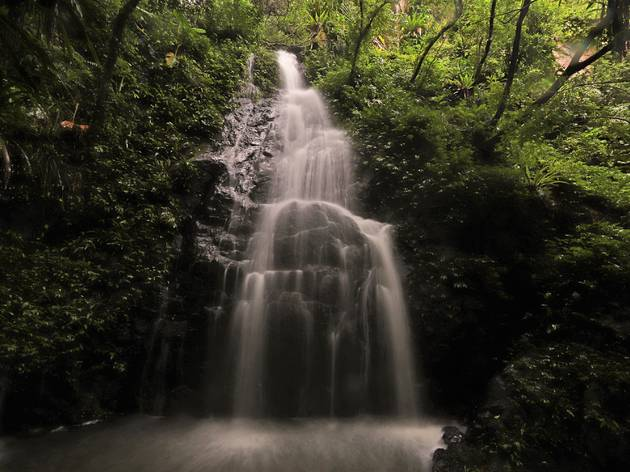 Kadoorie Farm and Botanic Garden waterfall in orchid haven