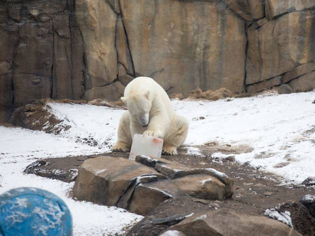 Lincoln Park Zoo will emerge from winter hibernation in March