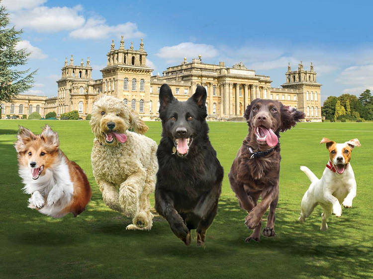 Head to an outdoor dog festival