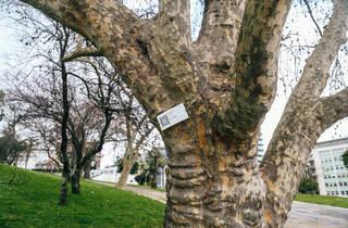 árvores de Lisboa