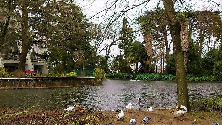 Lago dos Jardins do Palácio de Cristal