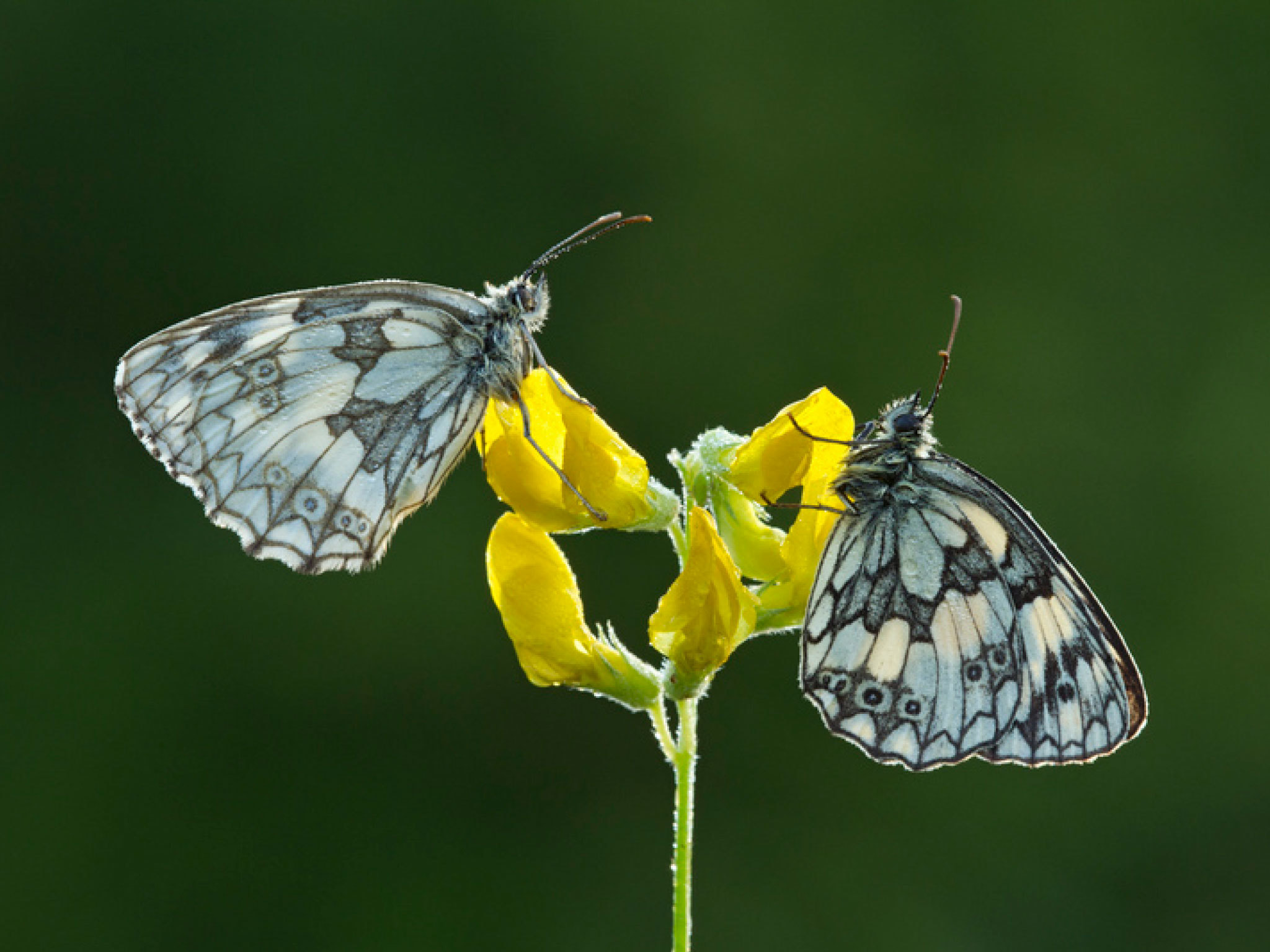 Curated butterflies