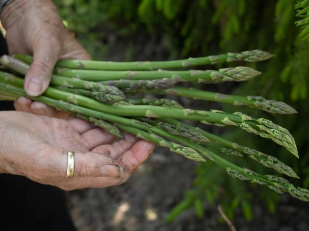 Food Ticket: eat your way to Peru with asparagus