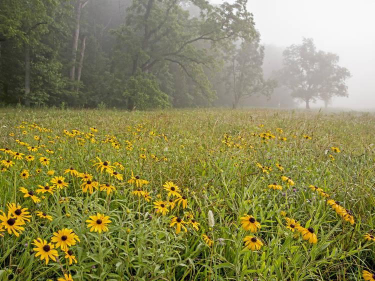 Great Smoky Mountain National Park, TN