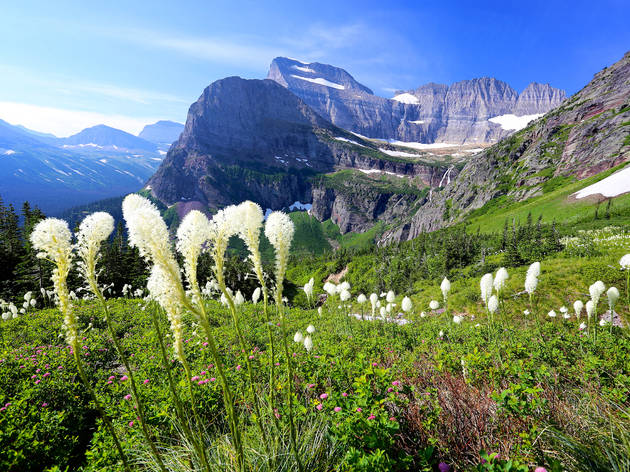Bear grass and beautiful mountain landscape Glacier National Park
