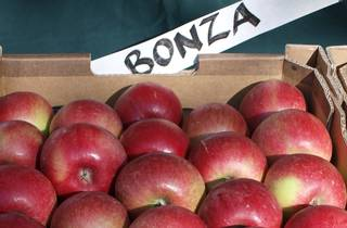 Apples at Harcourt Applefest