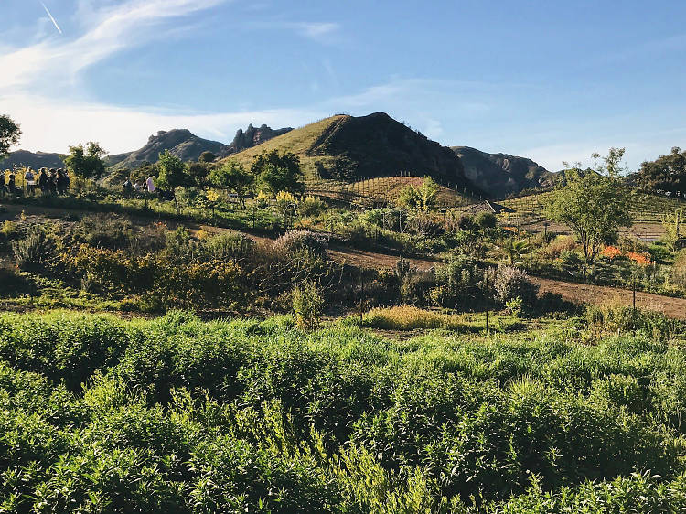 Reward a two-mile walk with vino at Malibu Wine Hikes