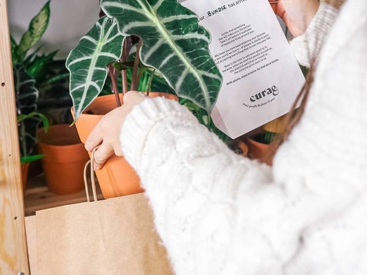 Curae recebe noite dedicada a plantas e cerveja artesanal