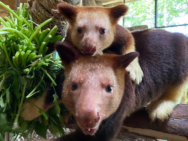 Close to 400 babies born and hatched in Singapore's wildlife parks in 2020