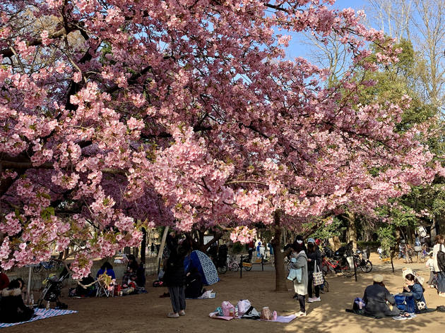 Rinshi-no-mori park
