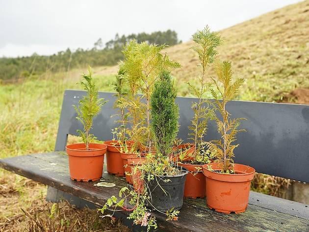 Matosinhos vai plantar 2100 árvores
