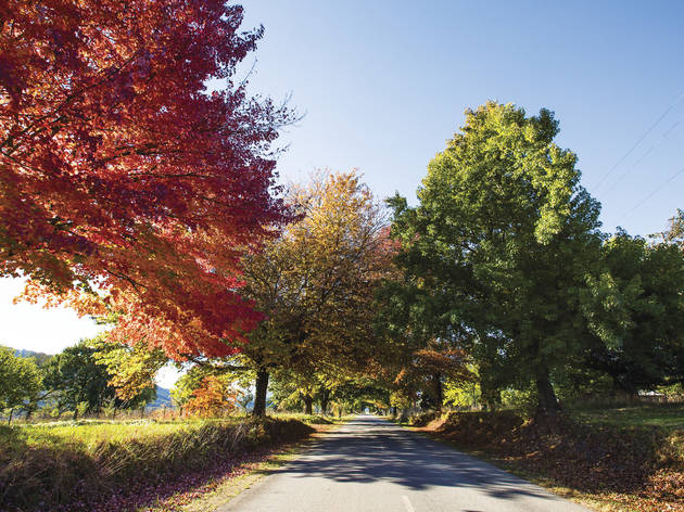 Buckland Valley Road in Autumn