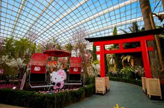 Sakura featuring Hello Kitty Floral Display