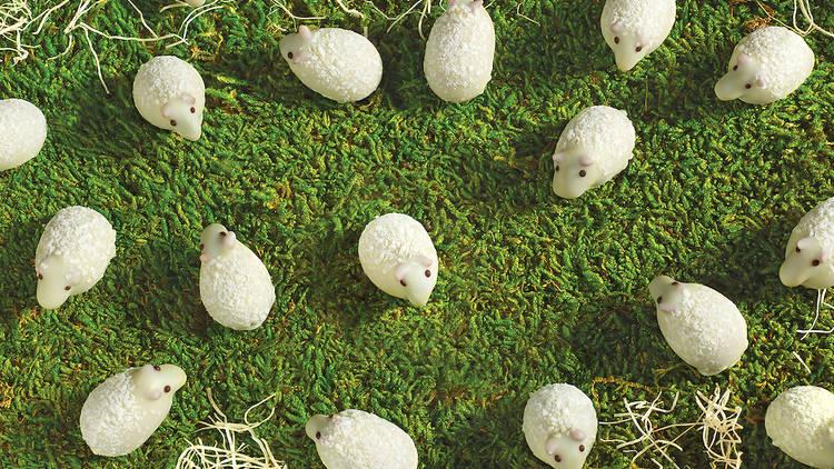 L.A. Burdick chocolate sheep