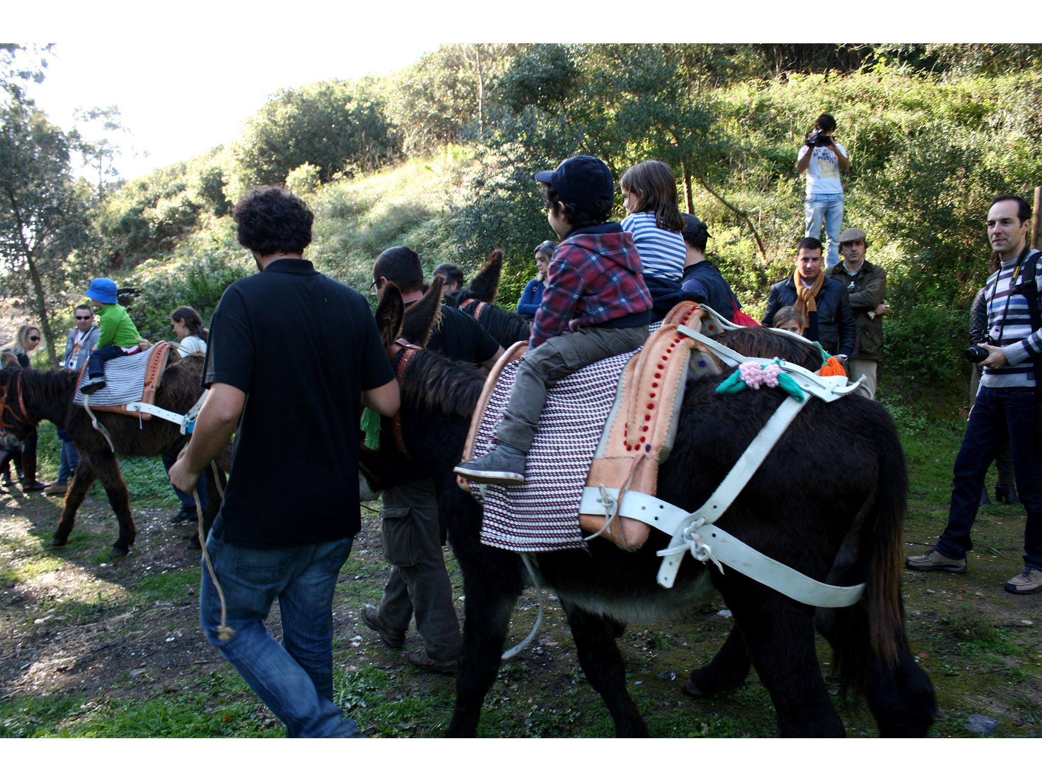 Quinta do Pisão, Actividades, Passeios de Burro