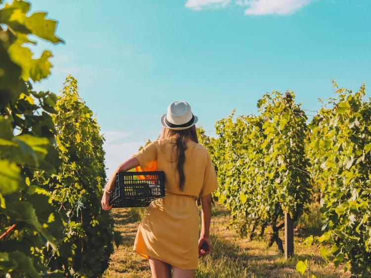 A travers la vallée de la Marne... Et les vignes de Champagne !