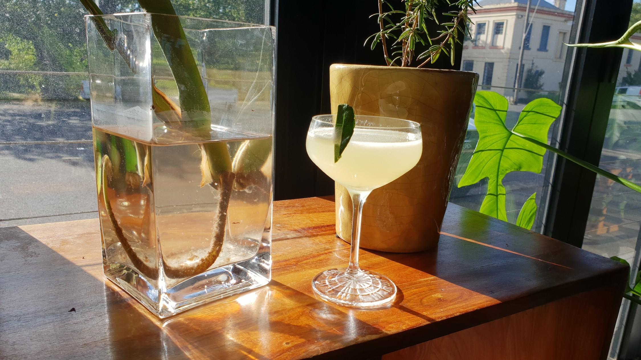 Animus Distillery cocktail