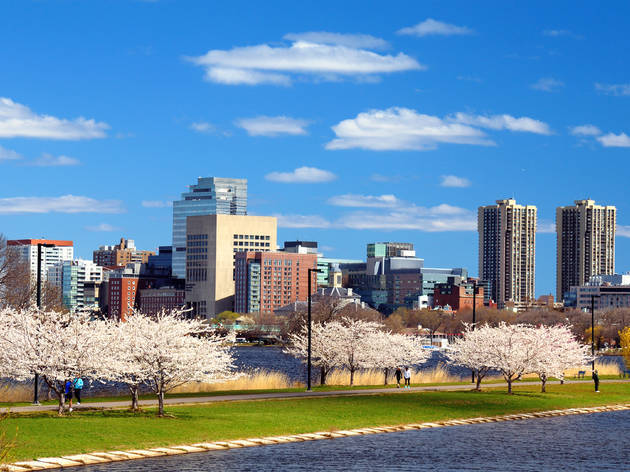 Boston,In,The,Spring,With,Cherry,Blossoms,At,Charles,River