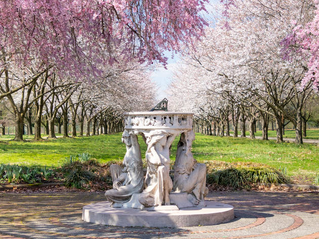 Sundial,And,Beautiful,Pink,Cherry,Blossoms,With,Trees,In,Full