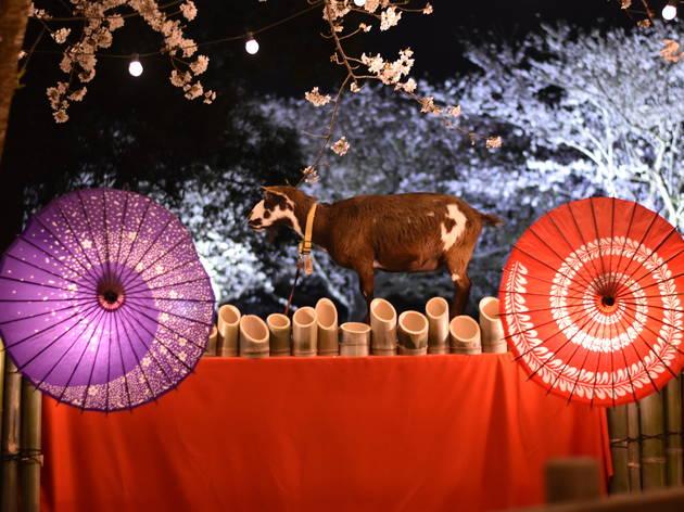 桜とヤギとハイチーズ