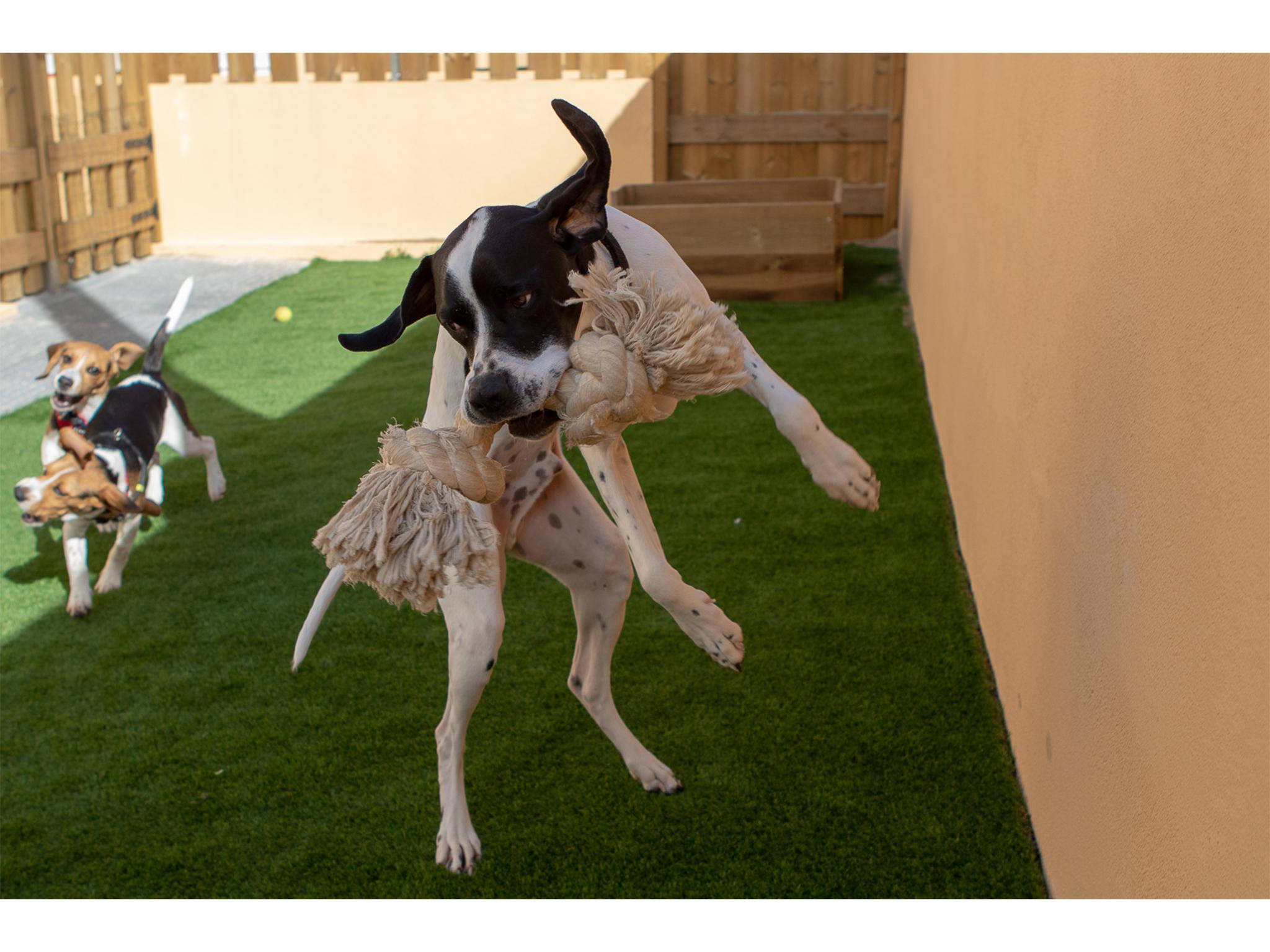ATL para Cães, Brincadeiras, Cães, Just4buddies