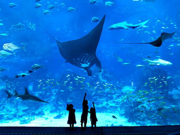 The Sea of Tiki, S.E.A. Aquarium