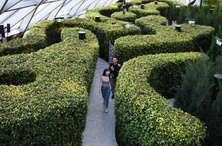 Canopy Park, Hedge Maze, Jewel Changi Airport