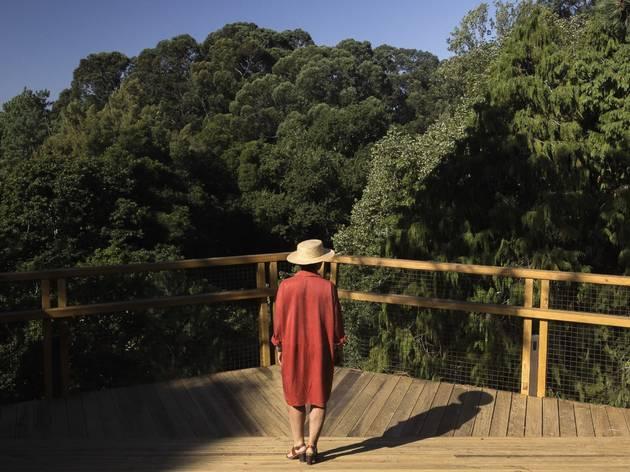 Treetop Walk de Serralves