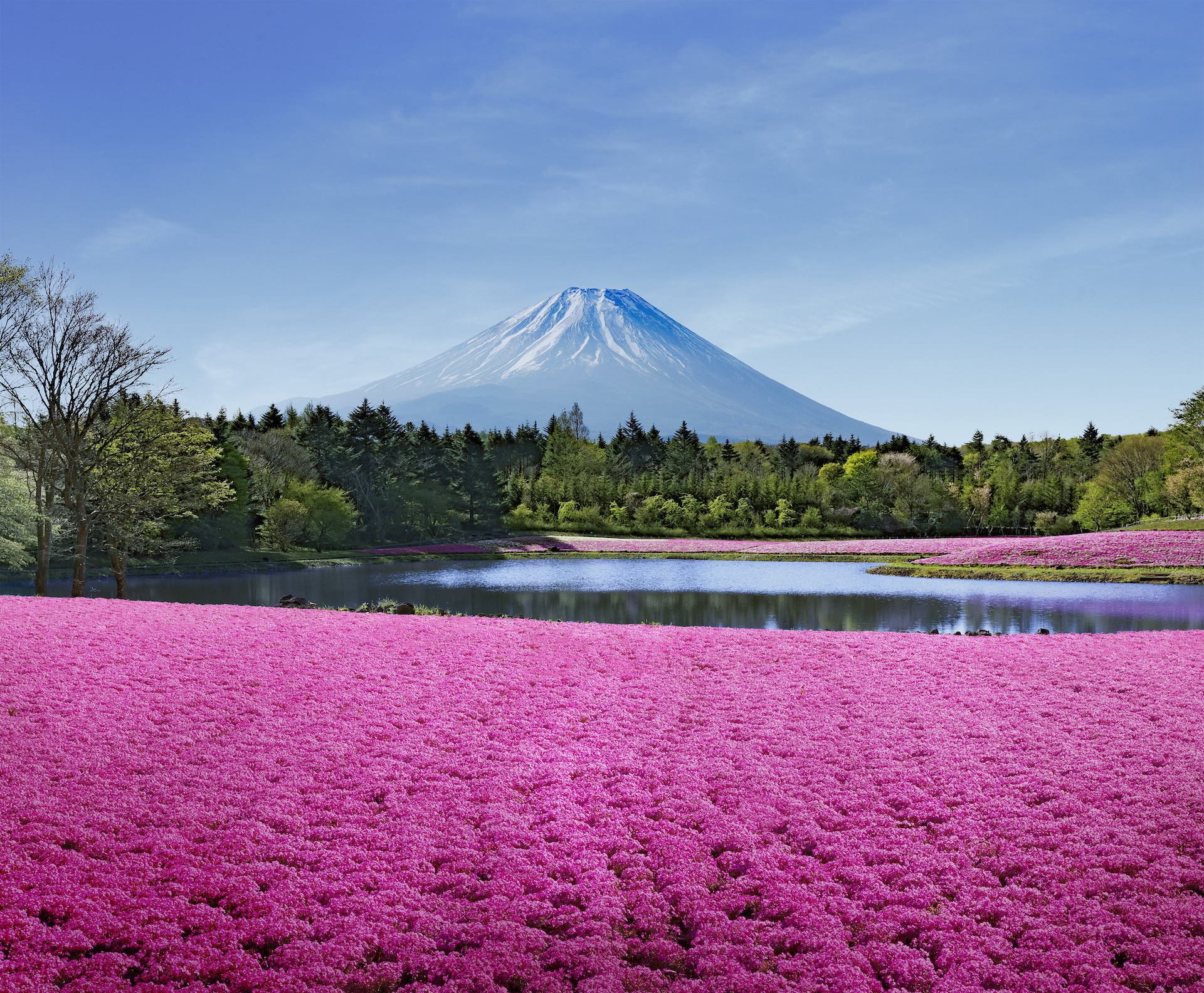 The most beautiful spring flowers in Tokyo – and where to see them all