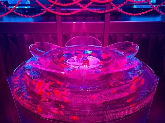 Art Aquarium spring
