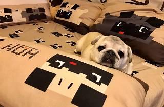 HomeSquare pet market