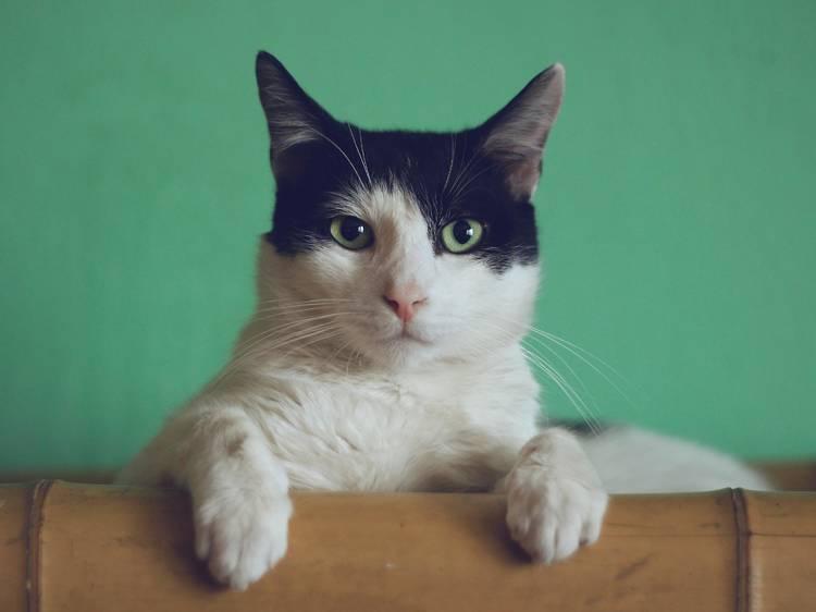 Sítios para adoptar gatos no Porto e arredores