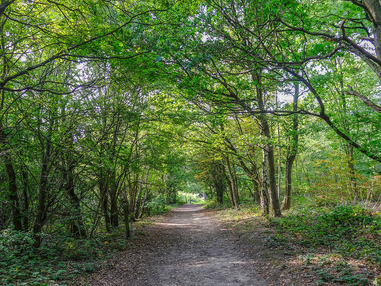 13 fairytale forests to visit in the UK