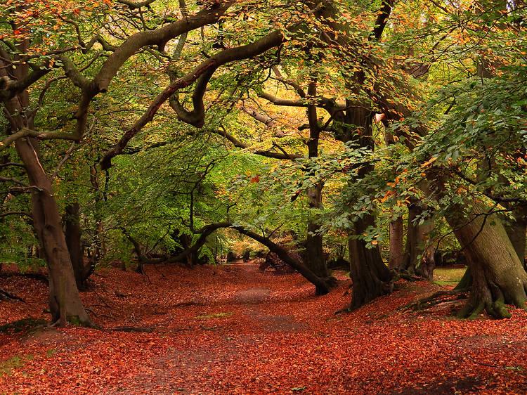 Hertfordshire's Ashridge Estate