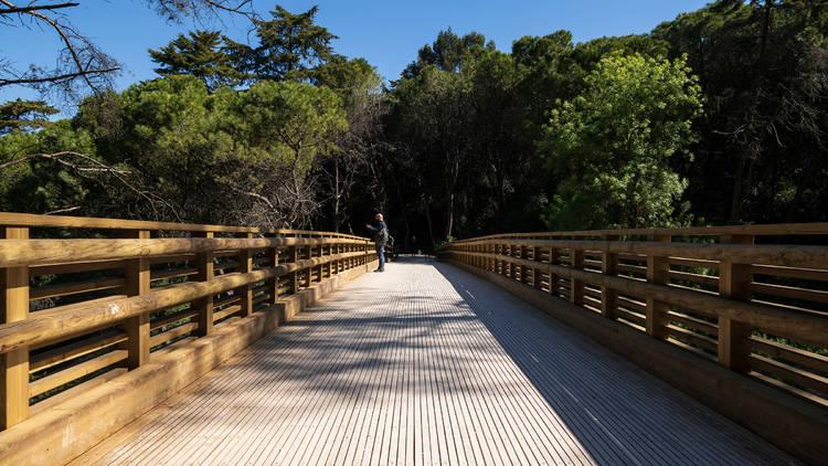 Viaduto ciclopedonal da Cruz das Oliveiras