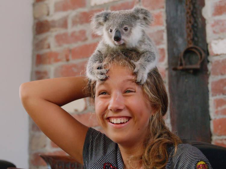 Izzy y los koalas: Temporada 2