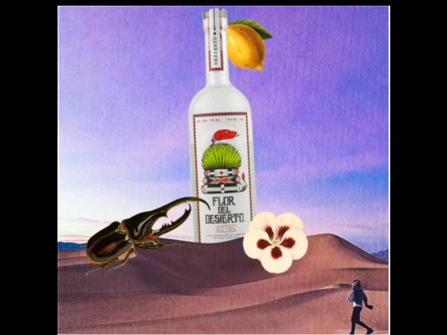 Sotol flor del desierto. Desierto