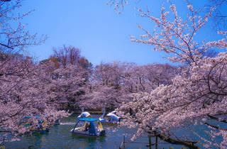 Photo: Makoto Honda/Dreamstime