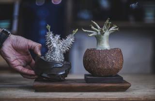 D2 Place botanical market 2021