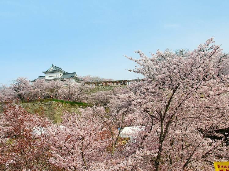岡山縣:熱鬧櫻花祭