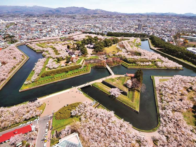 北海道:粉紅星星