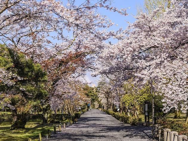 日本櫻紅 一期一會