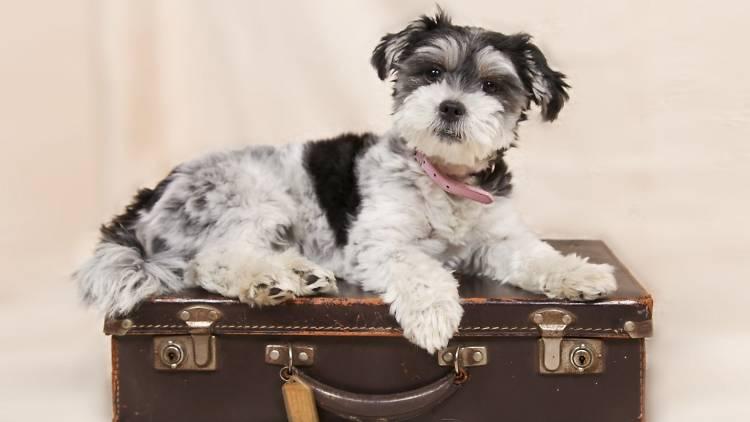 Cão turista